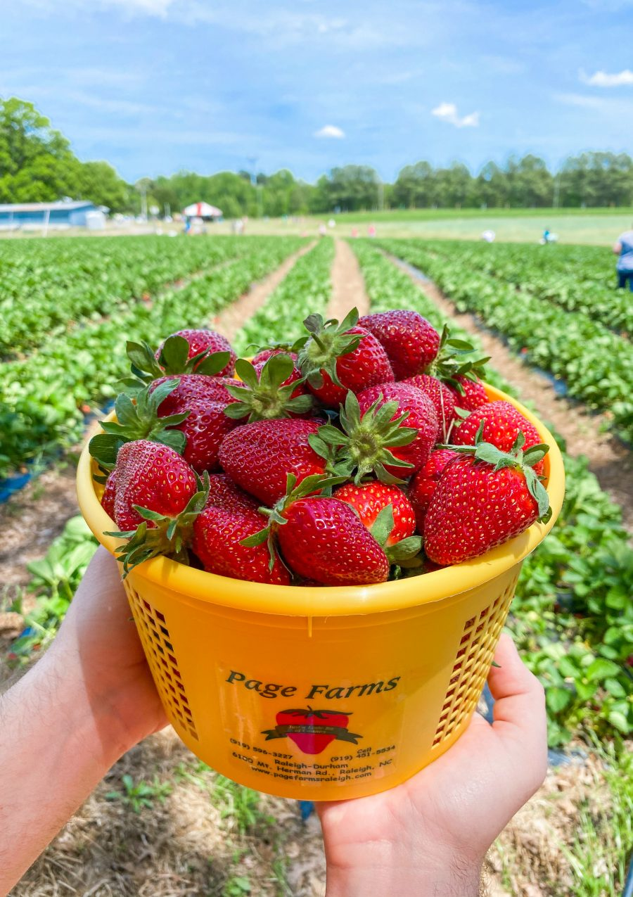 Where to Go Strawberry Picking in Raleigh-Durham