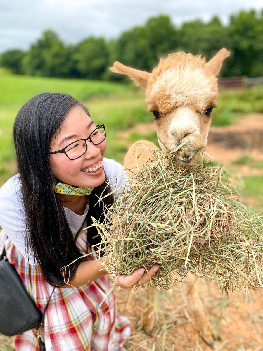 Visiting Purple Alpaca Farms